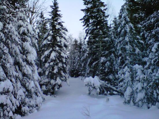 First Settler's Lodge: Private Snowshoe & X-Country Ski Trails