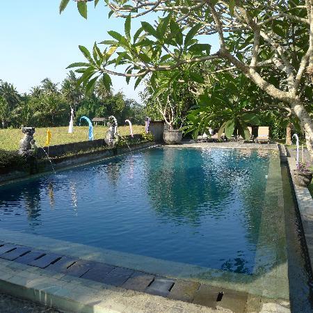 Mandala Desa : lovely pool
