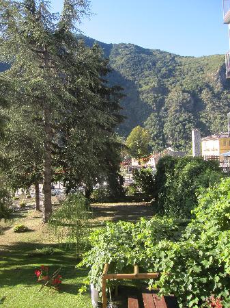Vinadio, İtalya: le jardin avec le vieux cèdre