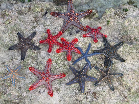 Diamonds Mapenzi Beach: stelle marine alla barriera corallina fronte spiaggia