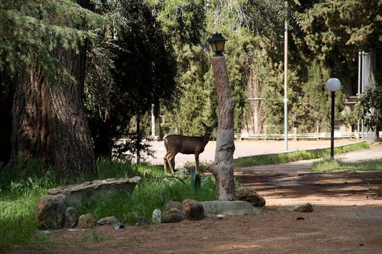 Highland Springs Resort and Conference Center: Wildlife abounds on the 2400 acre property