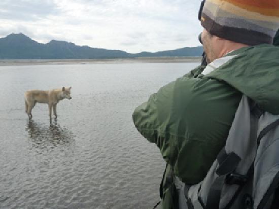 Cubs drinking picture of alaska bear adventures homer tripadvisor