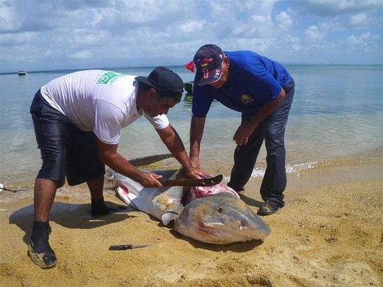 Vieques Puerto Rico Beach Rentals