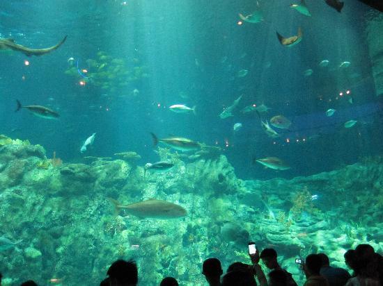 โอเชียนปาร์ค: aquarium