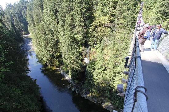 อุทยานและสะพานแขวนคาปิลาโน: View of bridge and canyon
