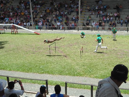 Decameron Panaca: dog show