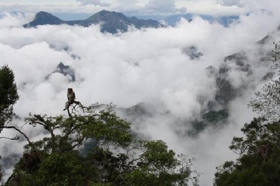 Zest @ Coakers Villa : View of clouds from Pillar Rocks