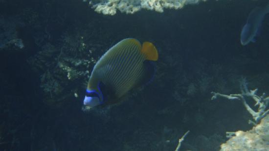 Shandrani Beachcomber Resort & Spa All Inclusive: Snorkeling