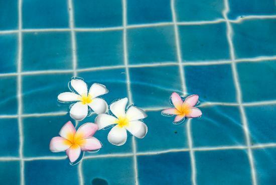 Blue Lagoon Resort Hua Hin: Plumaria flowers in our pool