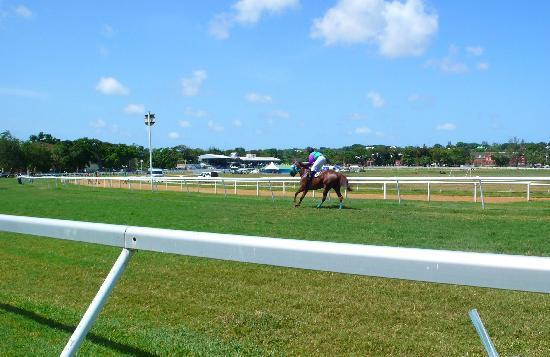 Barbados Turf Club: perfect view of the race track with the stands in the background and my winning horse