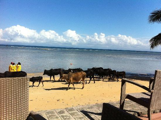 Soanambo Hotel: Breakfast view