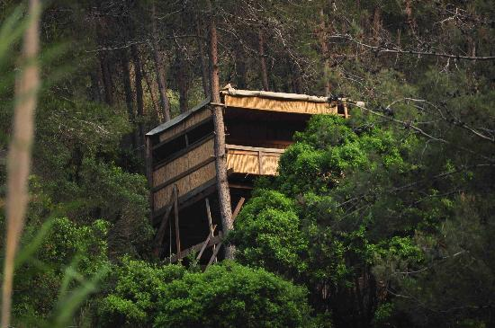 EcoVillage: tree house sama . that means sky as one feels he is in the sky up there .