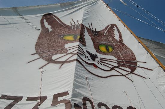 Catboat Rides: View of the sail from the boat