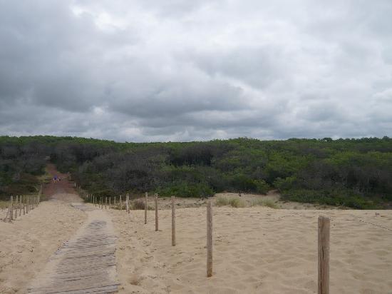 Camping Les Tourterelles: le chemin qui mène à la plage