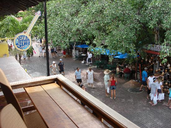 Jungle Smoothie Cafe : View looking North