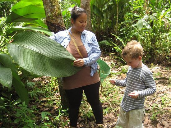 Kurakura Homestay: Opplæring i bruk av planter