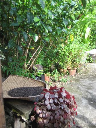 Kurakura Homestay: Verdens beste pepper av egen produksjon