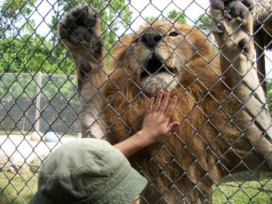 McCarthy's Wildlife Sanctuary: Ozlan