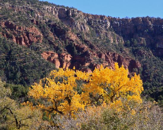 Jemez Mountain Trail : Fall color near Jemez Springs, NM