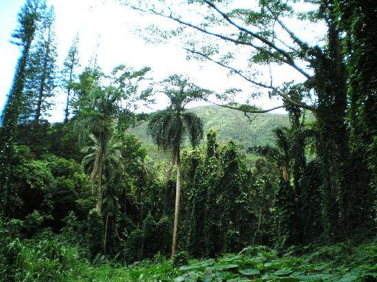 Manoa Falls: Monoa falls hike