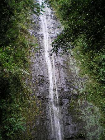 Manoa Falls: Monoa Falls
