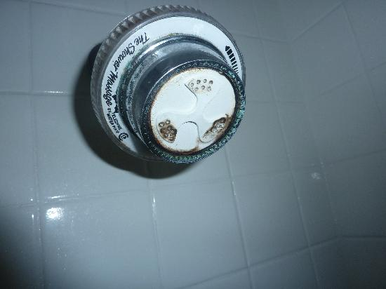 Quality Inn Stroudsburg: mold on shower head