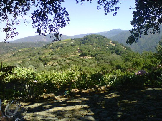 Kuleto Estate: Overlooking the view