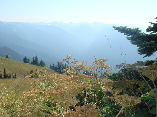 Hurricane Ridge: amazing views