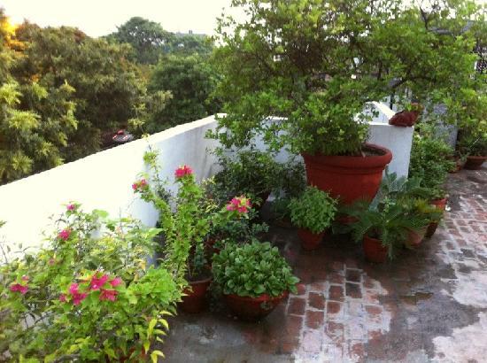 Thikana: The amazing roof top garden.