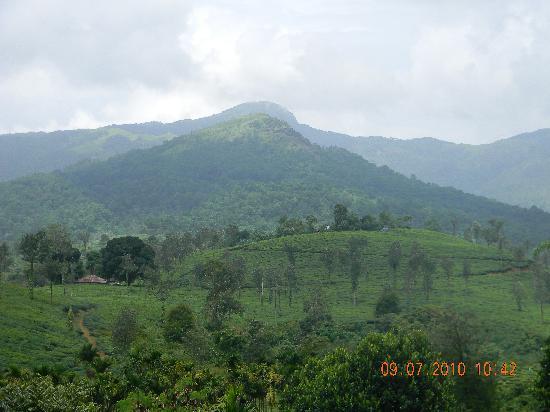 Pranavam Homestay: View from Pranavam