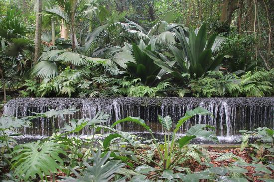 สวนพฤกษชาติสิงคโปร์: Botanic Gardens, Singapore