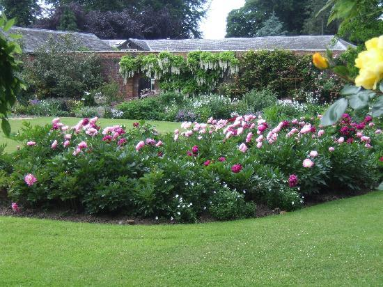 Peony Bed Amp Herbaceous Border Picture Of Glansevern Hall