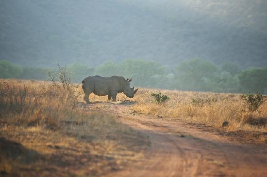 Nungu Game Lodge: Nungu Rhino
