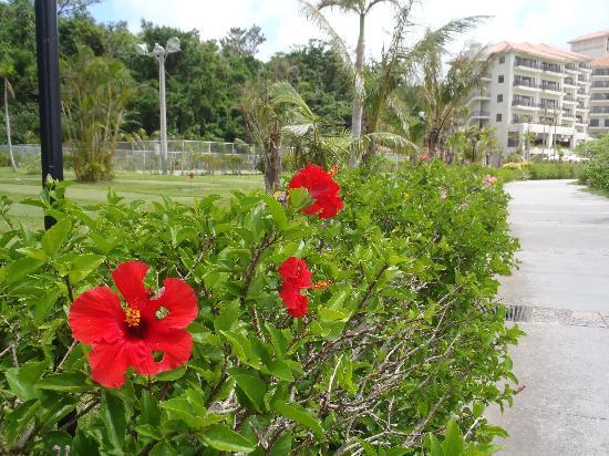 The Busena Terrace: 浜側からホテル棟を見る
