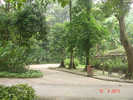Zoo Negara: Wide and shady walkway