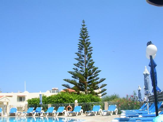 Villa Mare Monte: The Cypress tree