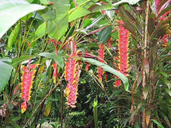 Las Islas Lodge : Gardens were spetacular
