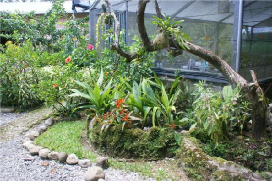 Hostel Orchid: Beautiful garden by the entrance