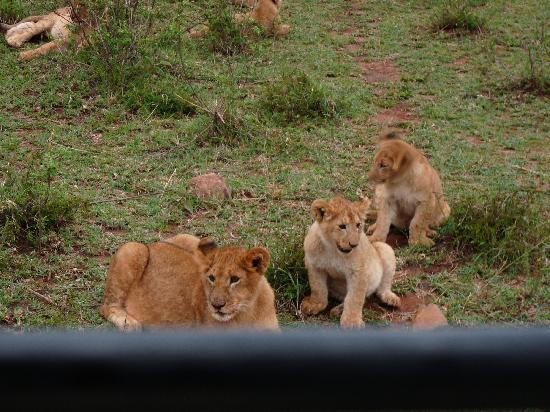 Elangata Olerai Luxury Tented Camp: Leeuwtjes