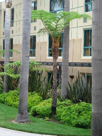 Sheraton La Jolla Hotel: australian tree fern