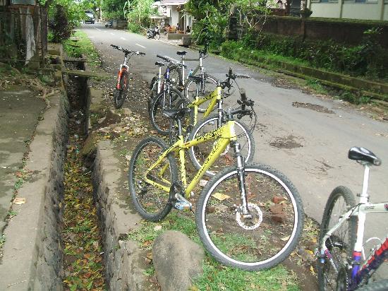 Banyan Tree Bike Tours: the bikes!