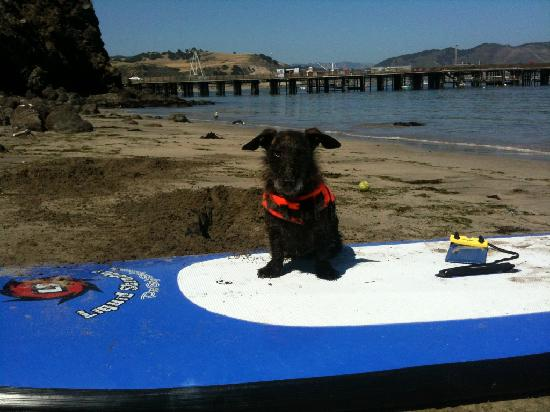 Avila Beach Paddlesports: We love dogs!