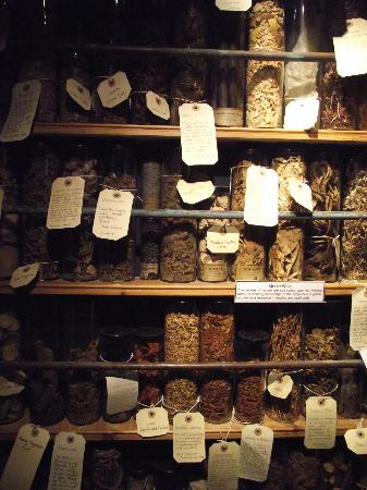 The Museum of Witchcraft: Ingredients for Witches brews...