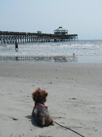 Tides Folly Beach: Chicklet Loves the Tides!