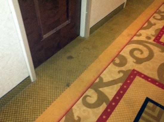 Red Lion Hotel Jacksonville: Carpet in front of our room