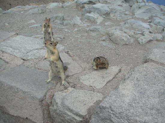 Crater Lake National Park: chipmunks