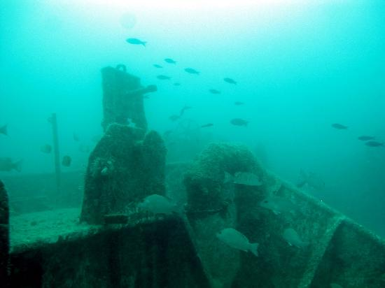 Vandenberg Wreck: Sea life around the bow