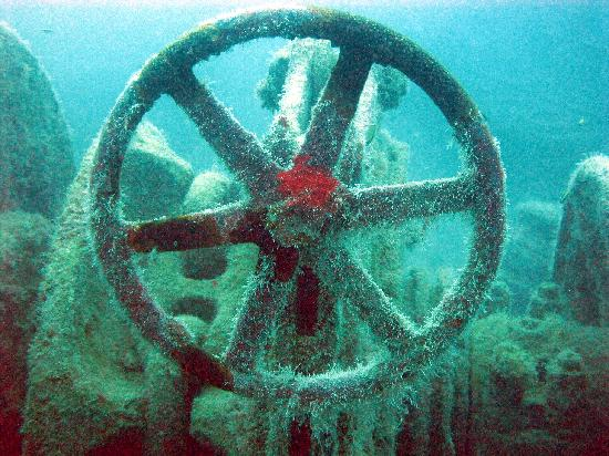 Vandenberg Wreck: Growth on wheel