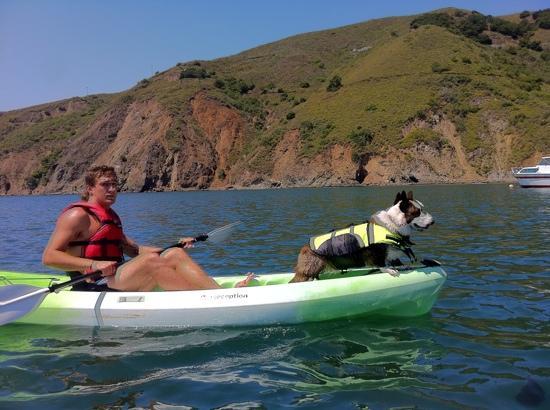 Avila Beach Paddlesports: kayaking corgi