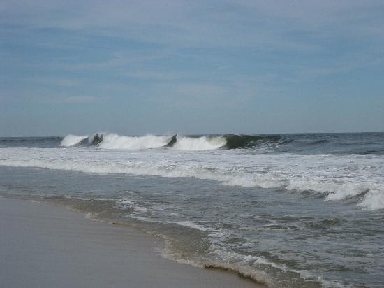 Island Beach State Park: Life is good!